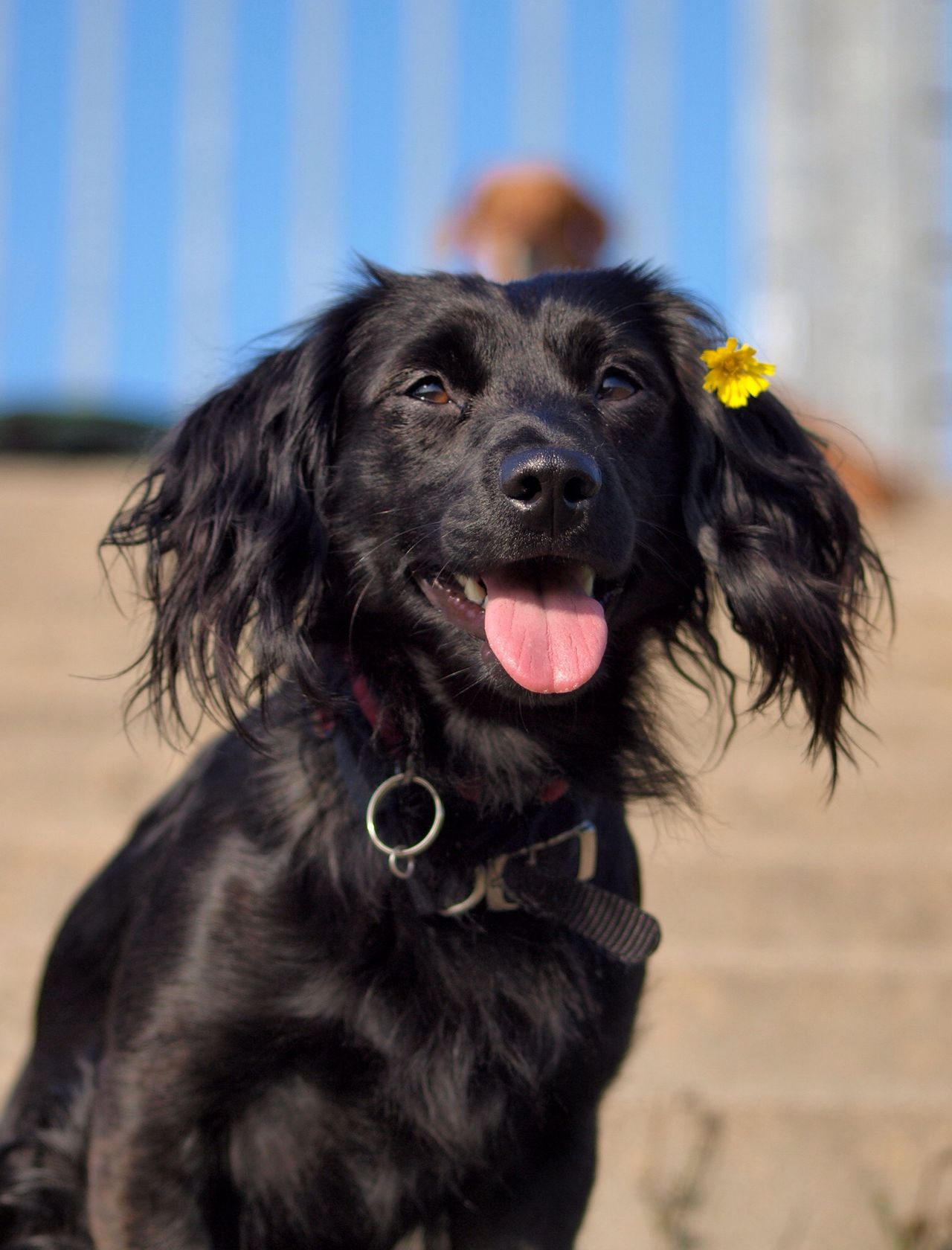 Beautiful stock photos of dogs, Animal Head, Animal Themes, Day, Dog