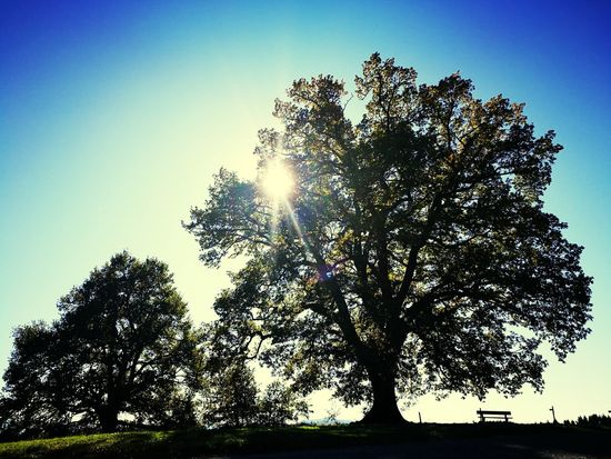 Tree Nature Low Angle View Outdoors Sky No People Day Growth Beauty In Nature Clear Sky Freshness Innovation Pixelated EyeEmNewHere