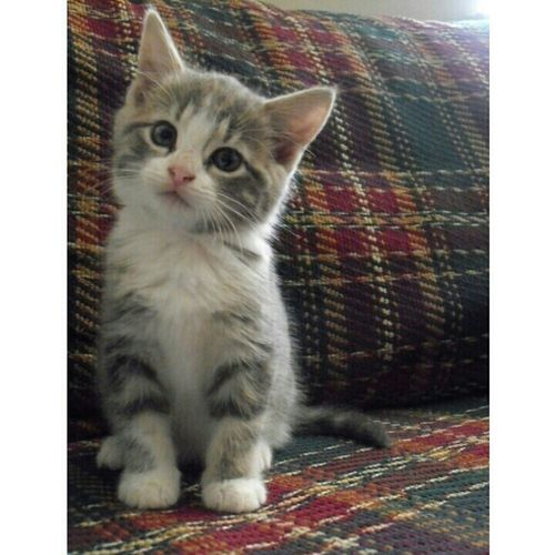 I WANT THIS KITTEN. 
