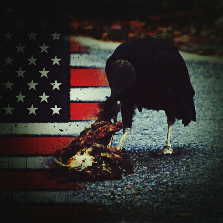 """""""Picking Bones"""" While working on another """"assignment"""", I saw a photo of a vulture eating a carcass and I felt compelled to create how I feel. Darkart Art Artistic Government America Photo Manipulation How I Feel Middle Class America Middle Class Photomanipulation Vulture Carcass"""