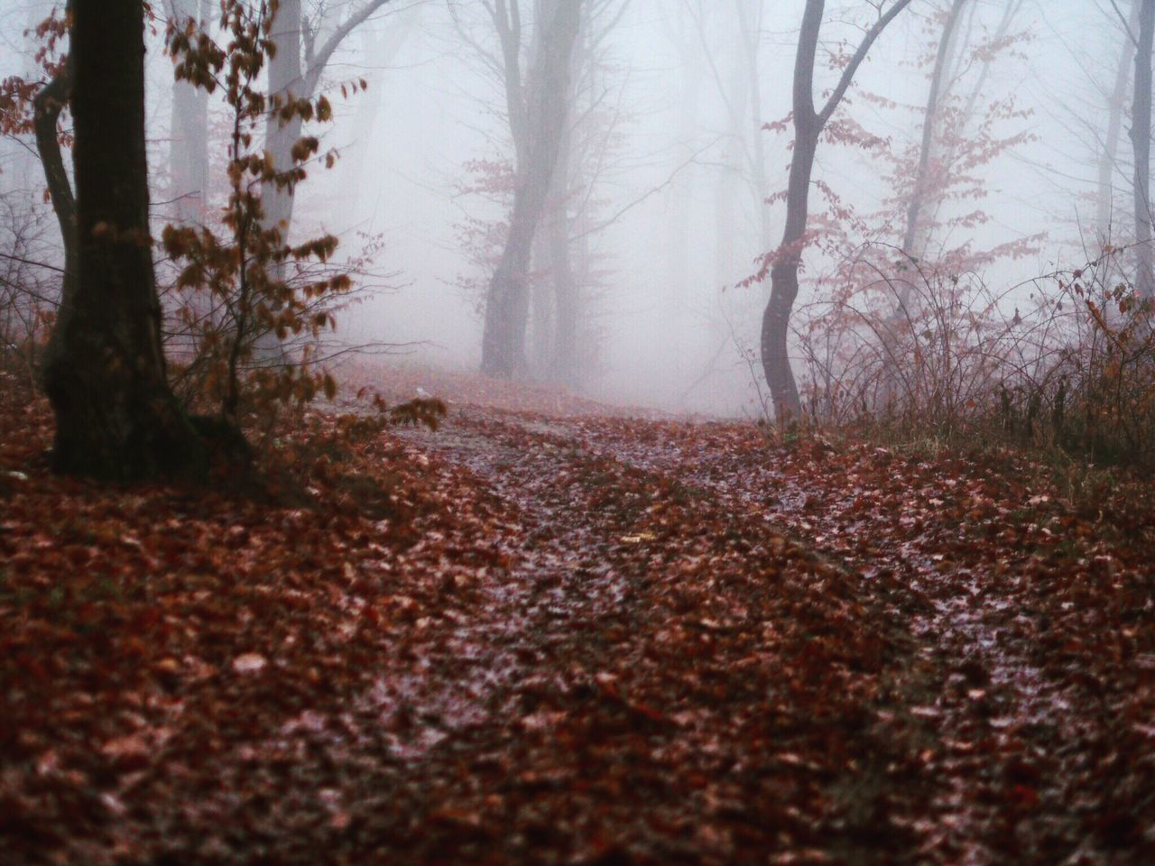 Forest Nature Tree Fog Tree Trunk Autumn Winter Landscape Outdoors Beauty In Nature Scenics Tranquility Single Lane Road Day No People