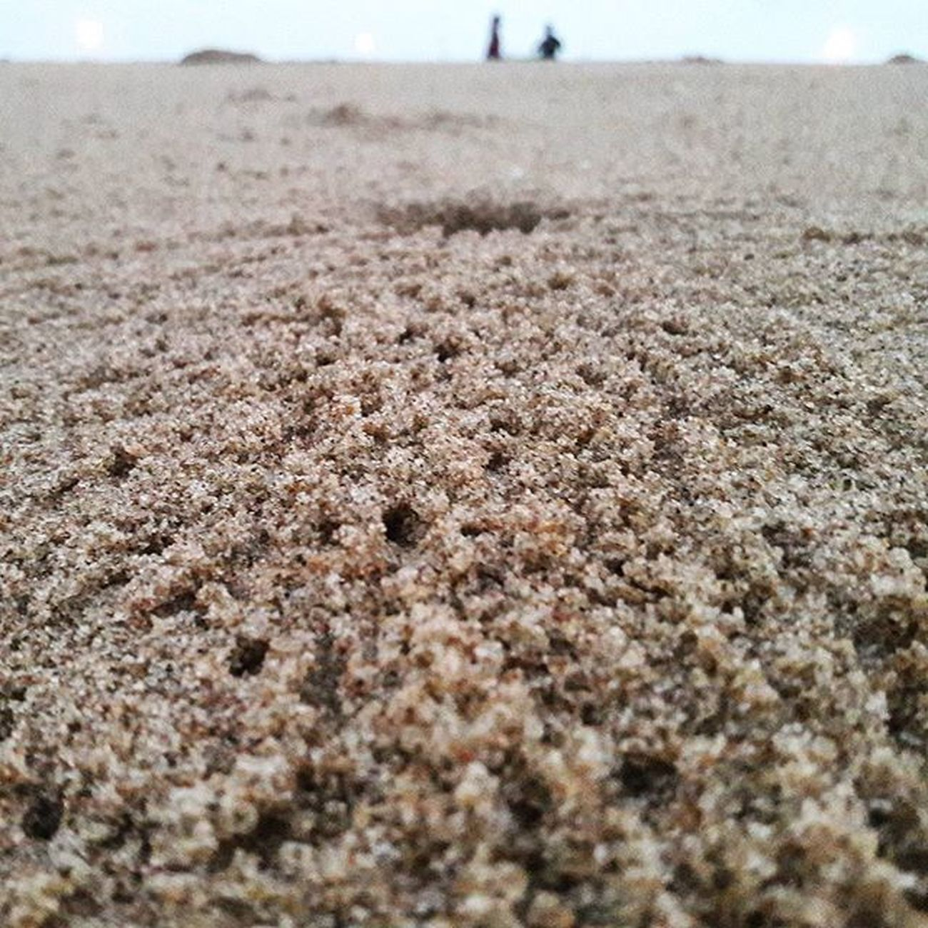 🐾Way of Crap nest..crab foodpath..🐾 Crab Nest Hole Crabnests Beachphotography Beach Sand Way Foodpath Pavement Mobilephotography Mobilecam Mobileshotz_ Instgram Instapic Instaview Natgeo Discoverychannel Animals