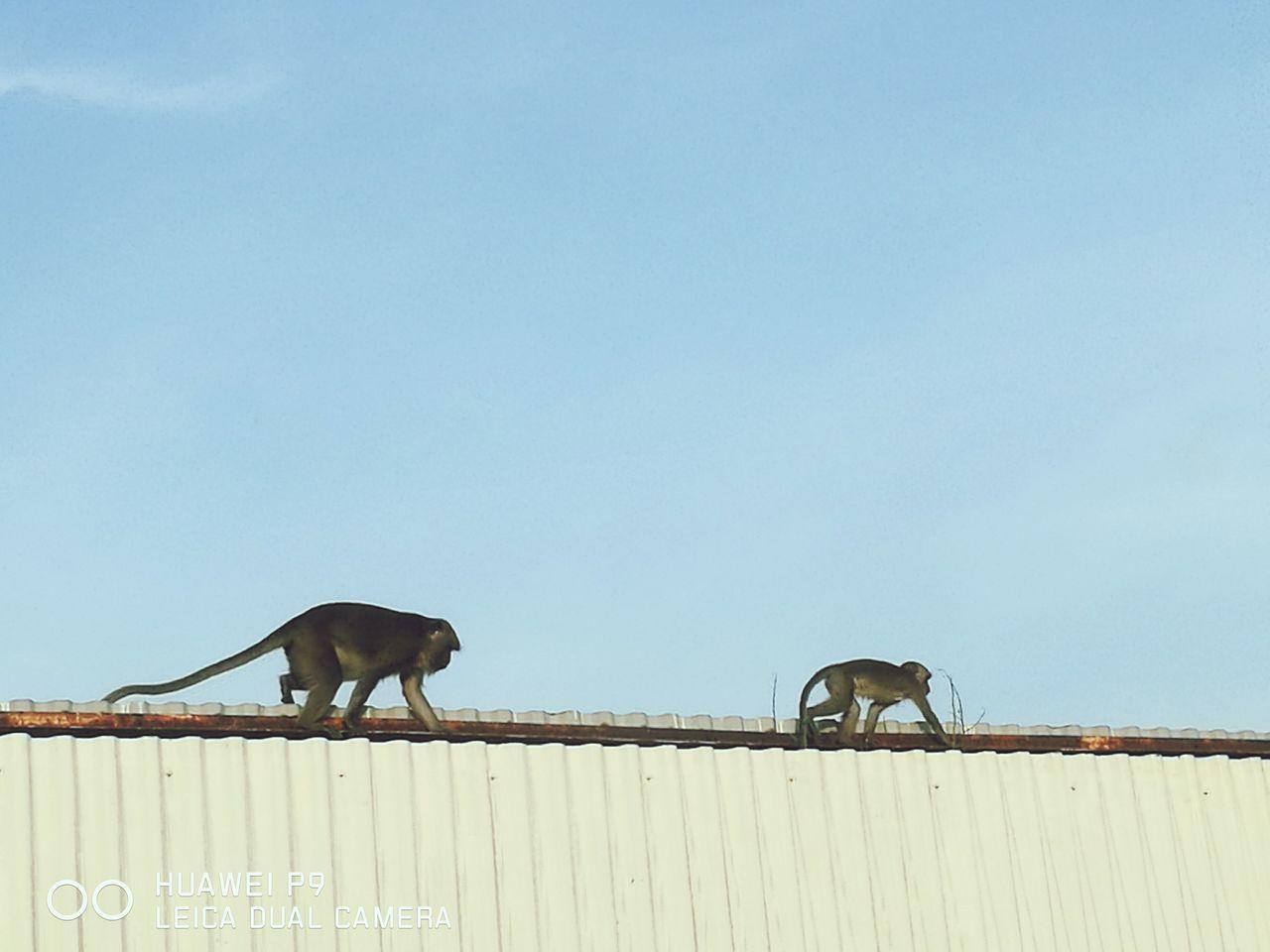 Huawei HuaweiP9 Monkey Animals Family Relaxing
