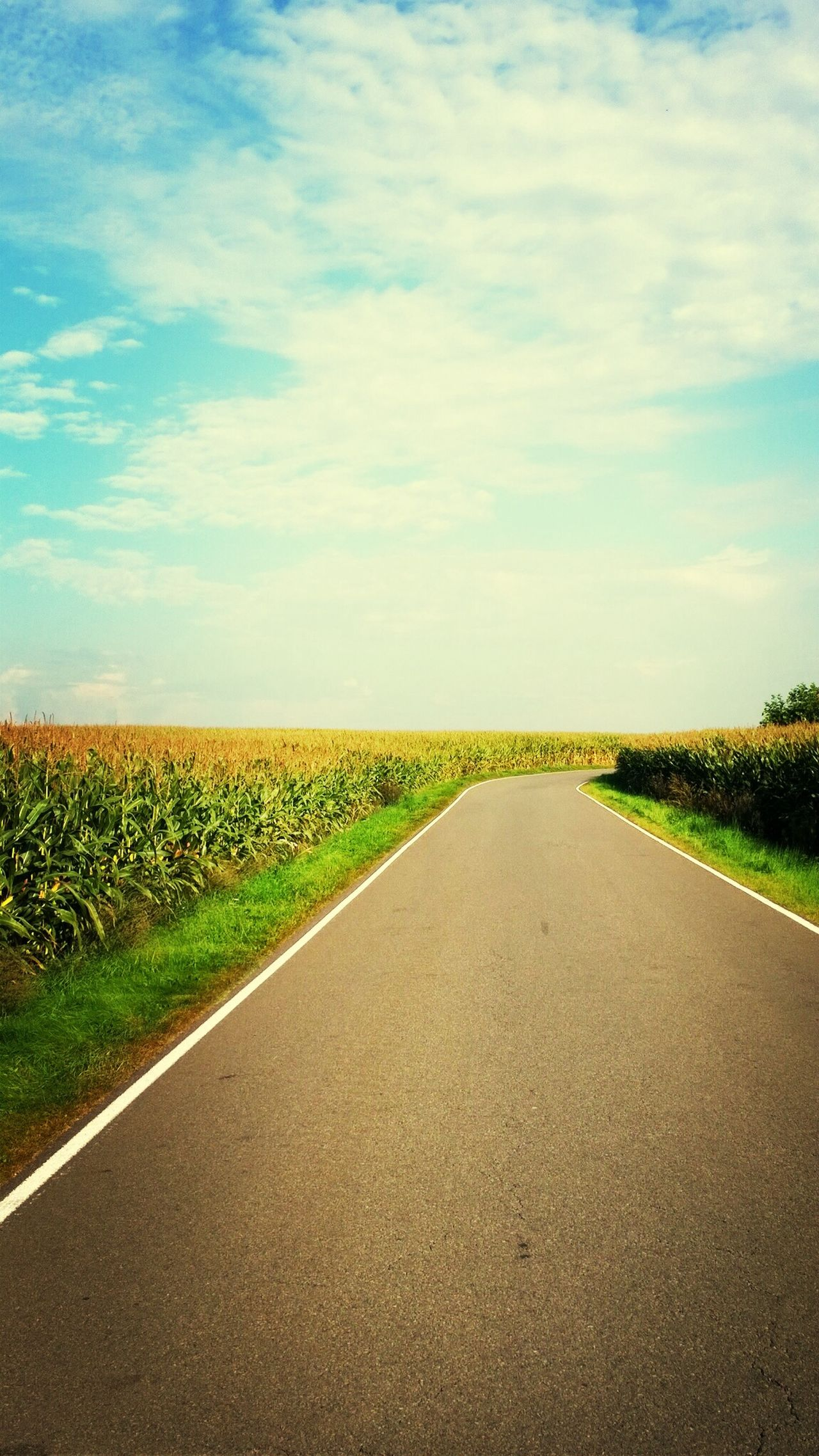 Beautiful stock photos of road, Agriculture, Cereal Plant, Country Road, Crop