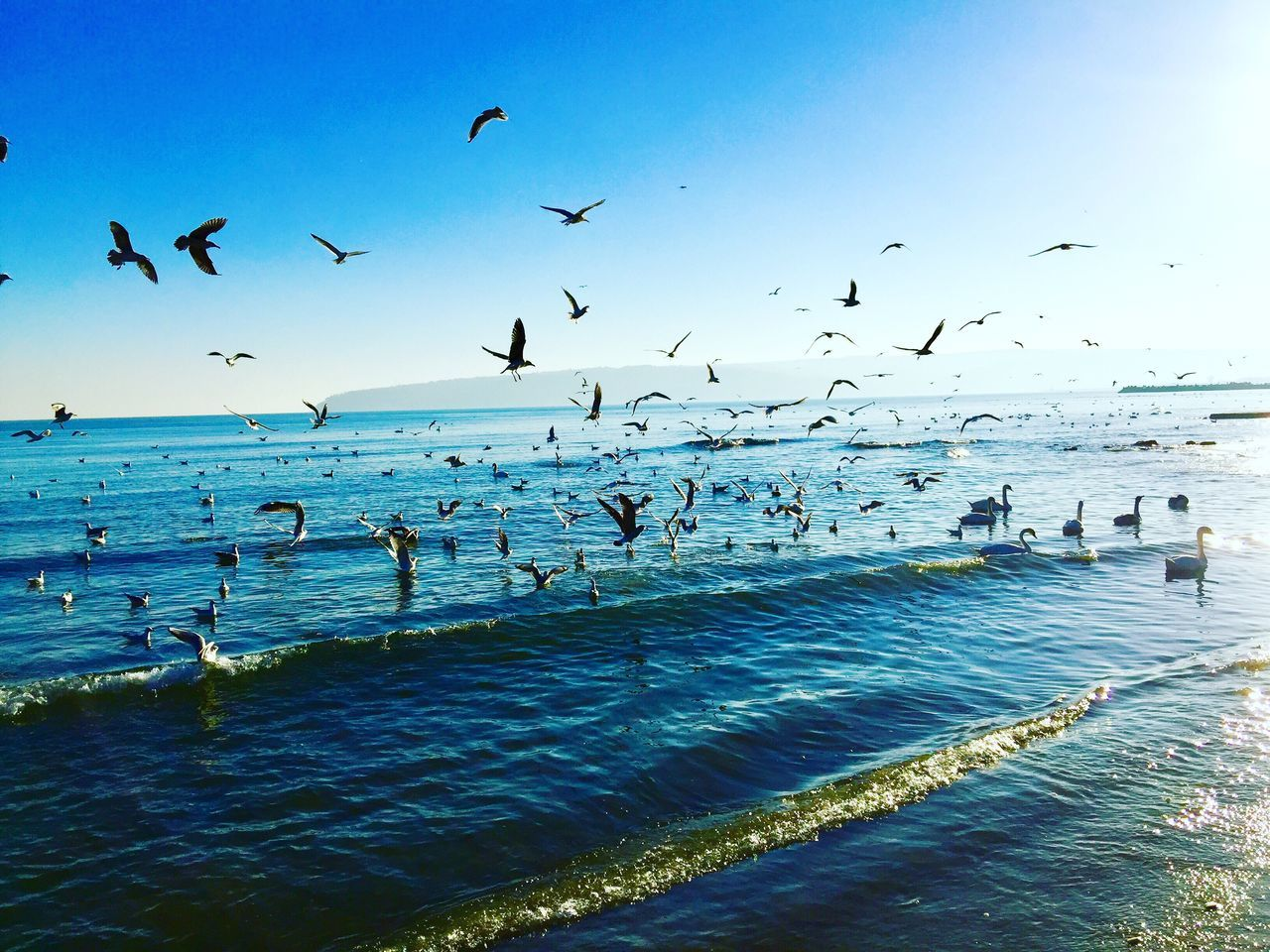 Bird Flying Sea Water Animals In The Wild Large Group Of Animals Flock Of Birds Nature Sky Scenics Animal Wildlife Real People Outdoors Horizon Over Water Large Group Of People Beauty In Nature Migrating Swimming Day Men Adapted To The City