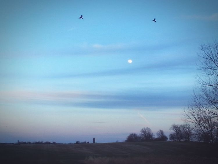 A Wisconsin Sky Taking Photos Sky Collection WisconsinSunset Moon Birds Trees Aneye4theshot