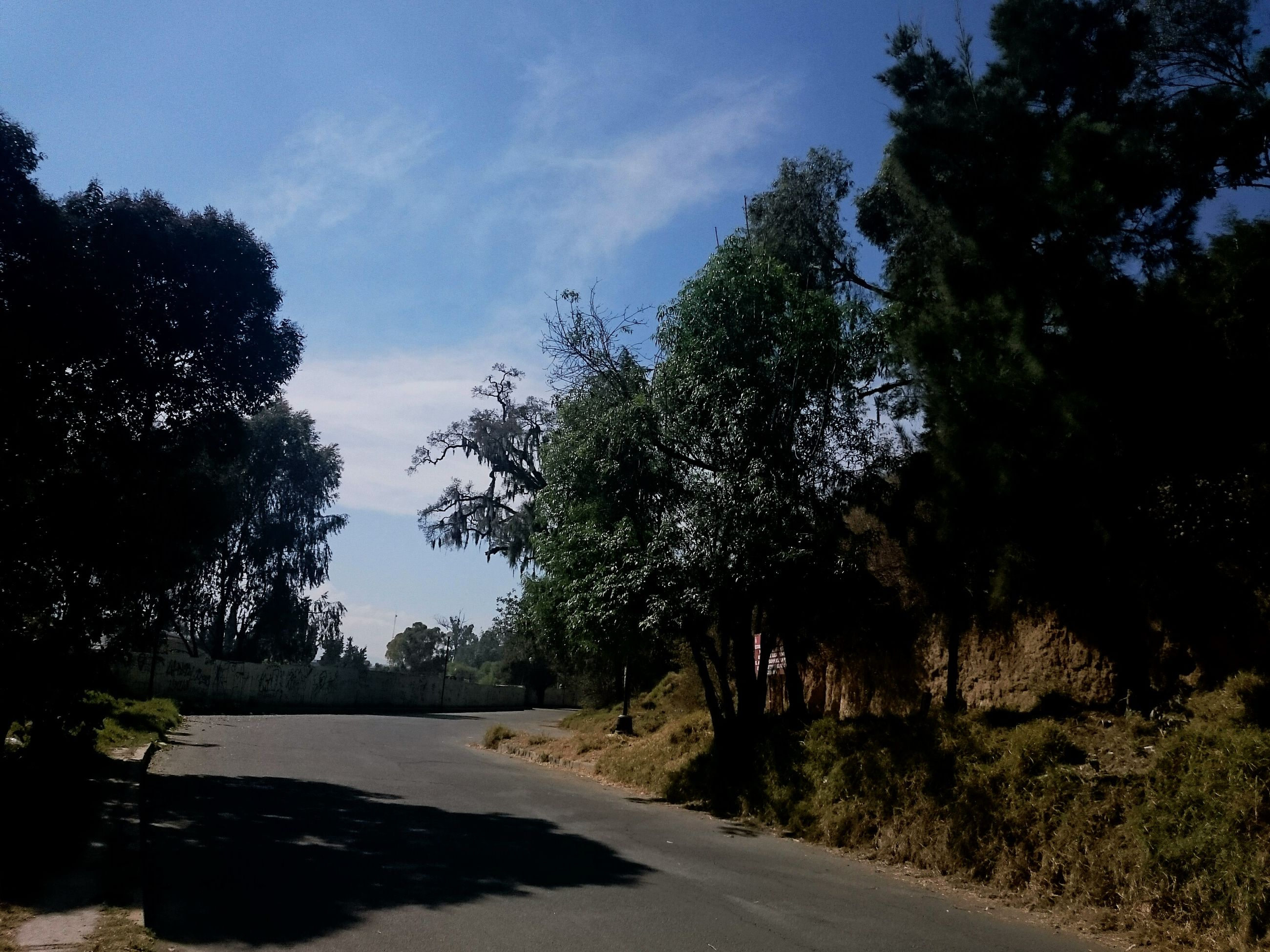 tree, the way forward, sky, tranquility, tranquil scene, road, growth, nature, beauty in nature, scenics, sunlight, footpath, shadow, street, diminishing perspective, transportation, outdoors, no people, day, branch