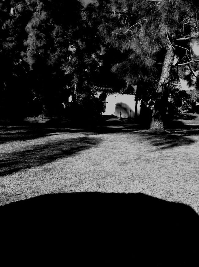 Taking Photos Being Cultured Learning FirstEyeEmPic First Eyeem Photo Landscape Blackandwhite Black And White