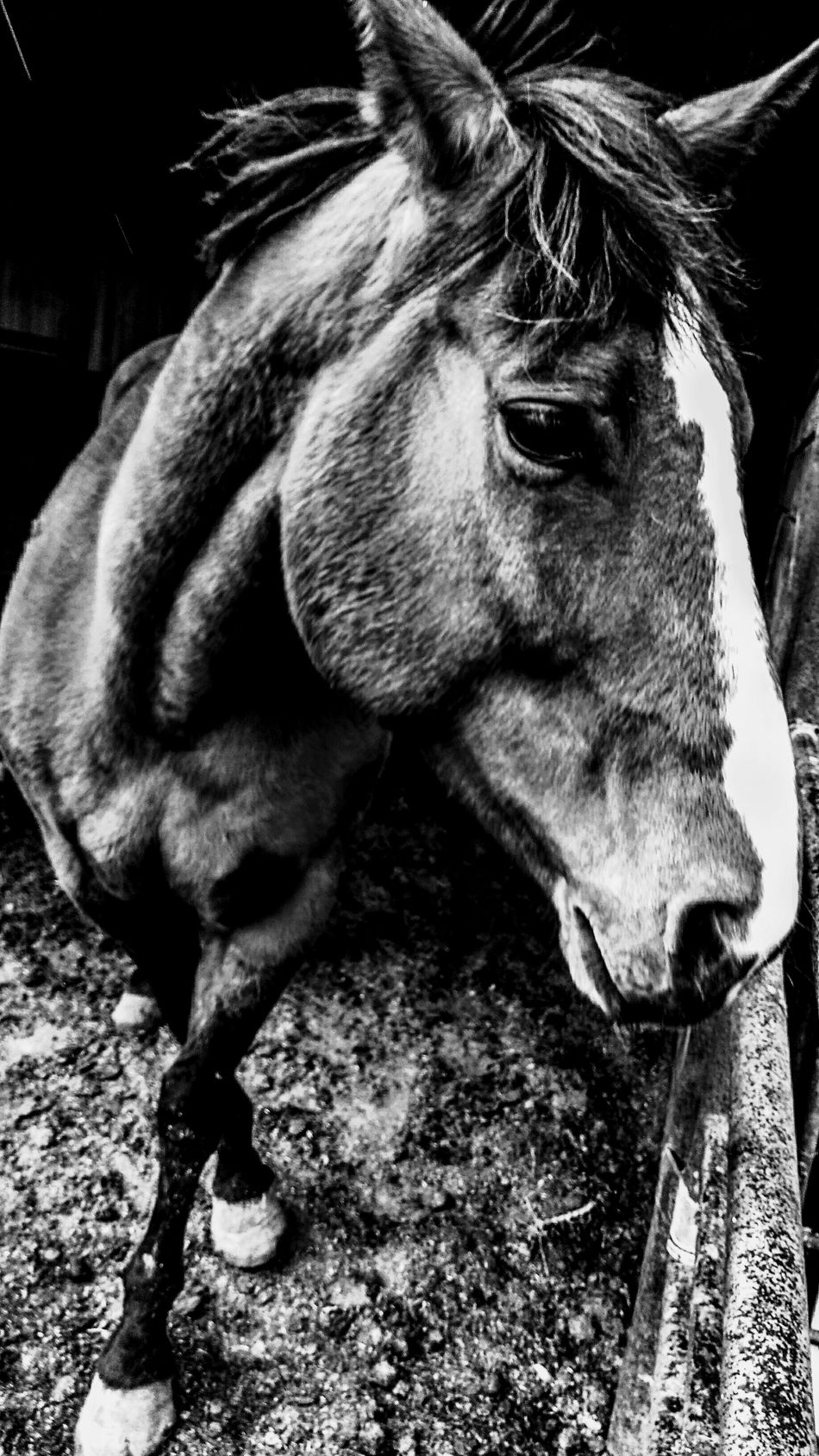 Ranch horses Horse Domestic Animals Animal Themes One Animal Livestock Mammal Close-up No People Working Animal Day Nature Outdoors Farm Ranch Country Living Silhouette Pasture, Paddock, Grassland, Pastureland Filly Barn Stable Paddock Cowboy Ranch Life Country Life Animal Head