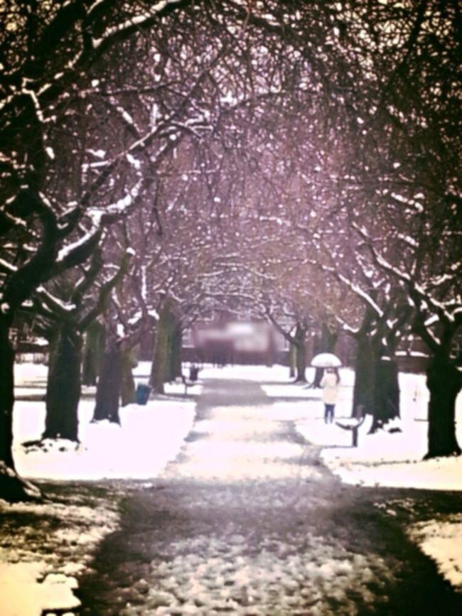 Winter Winter Wonderland Snow Cold Winter ❄⛄
