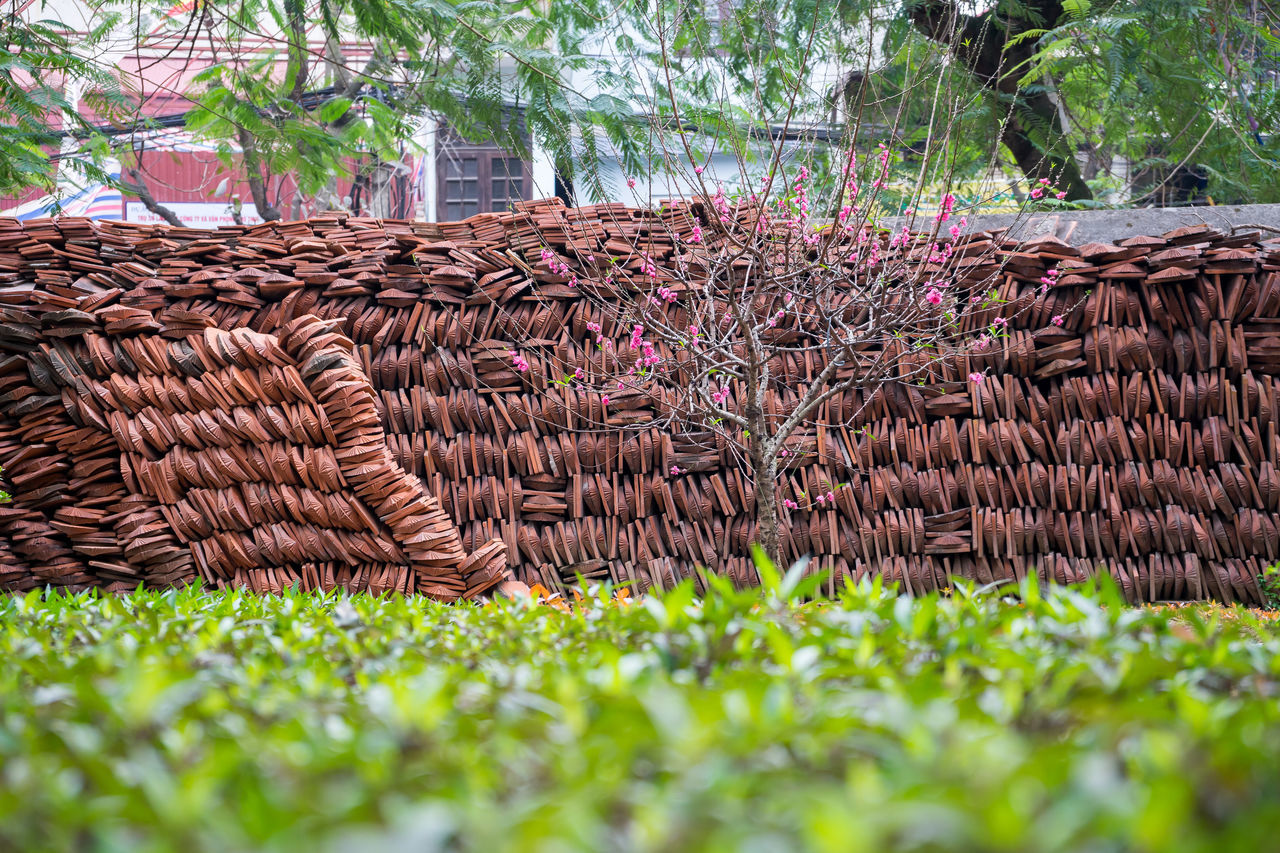 Asia, Vietnam, Travel Absence Abundance Architecture Bridge Building Exterior Built Structure Day Depth Of Field Focus On Background Growing Growth House Hut No People Old Outdoors Roof Roof Tile Selective Focus Thatched Roof Traveling Tropical Climate Vietnam Wood Wood - Material Wooden