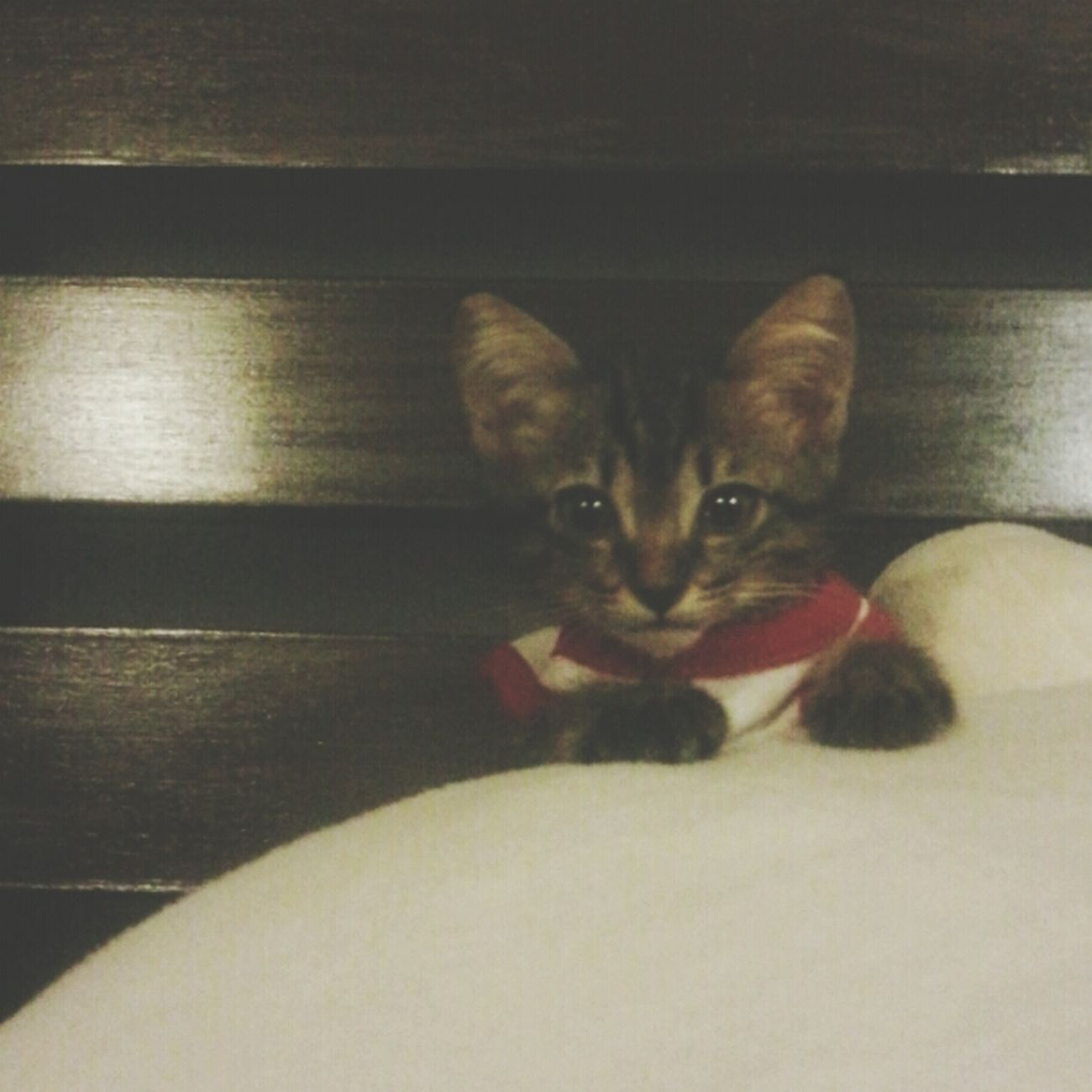 I need more catnip plzzzzz! Where Is My Catnip ? Kingko Kitten #adorable Catnip