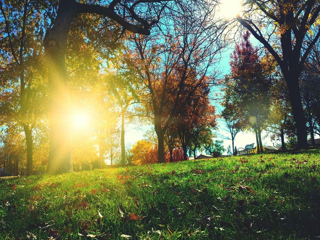 Beautiful stock photos of sun, Autumn, Awe, Back Lit, Beauty In Nature