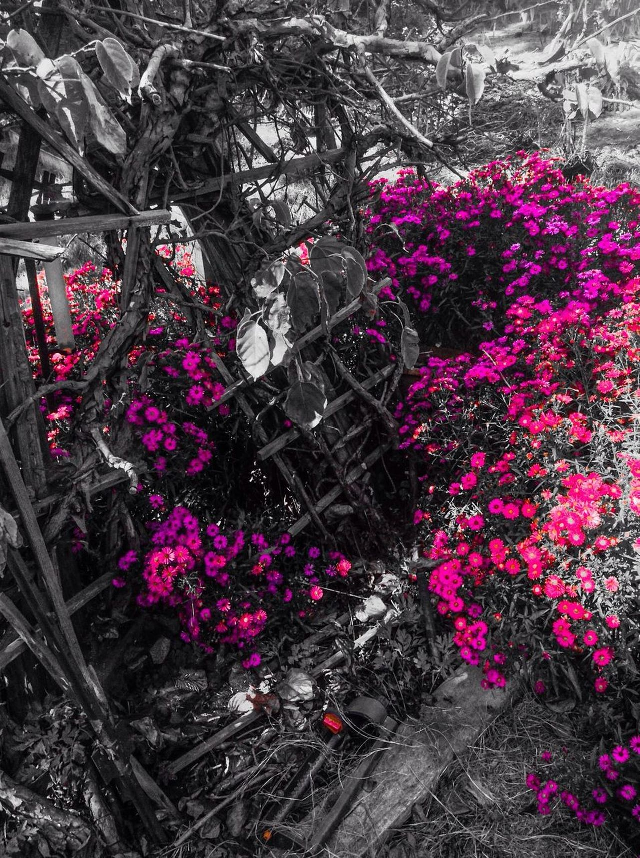 Colorsplash Flowers Dead Alive.