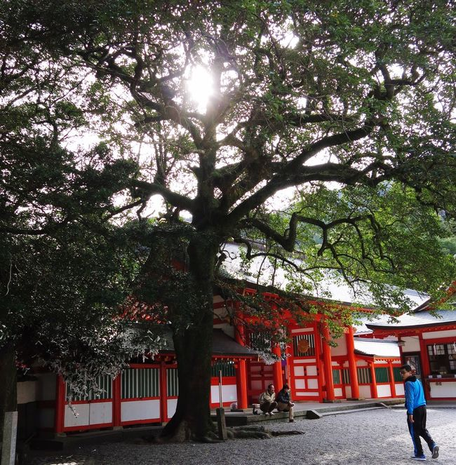 Shinto Shrine Shrine Wakayama Japan 速玉大社 Tree