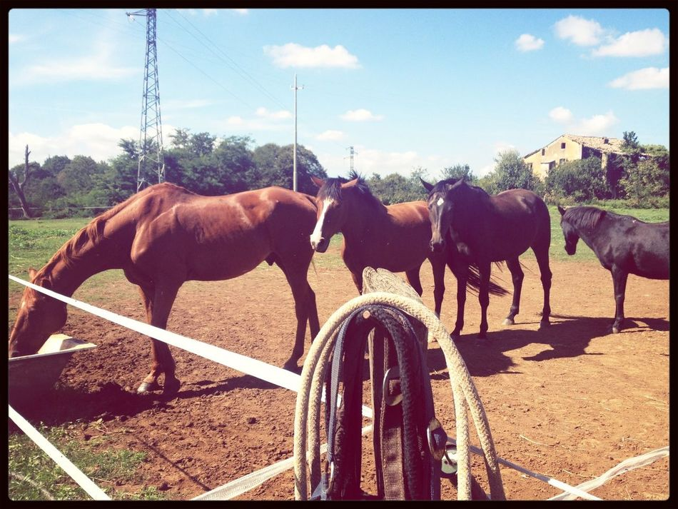 Nature Horseback Riding