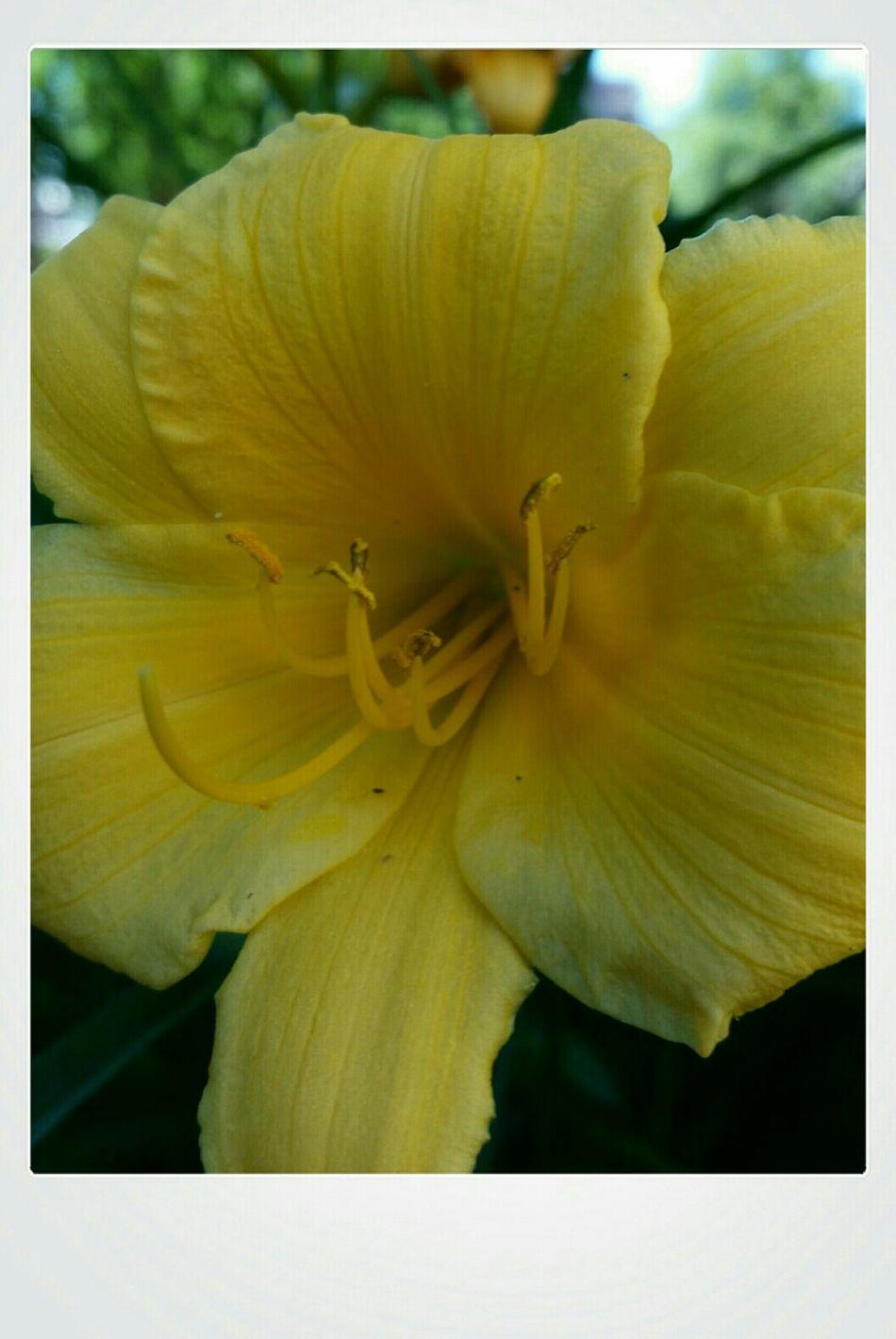 Photo Des Fleurs Yellow