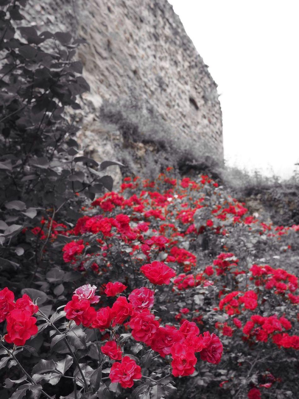 Blackandwhite Flowers Red