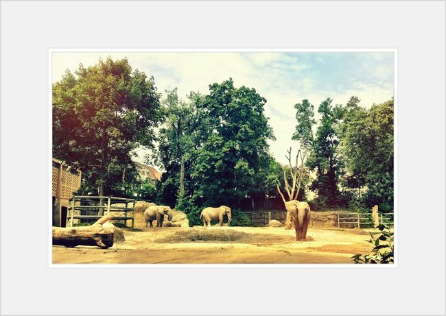 Expedition Zoo