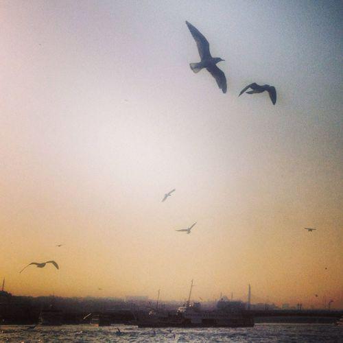 Ben en cok martiya asik olmus baliga uzuluyorum. Bosphorus Enjoying The Sights Sail Away, Sail Away Instagood