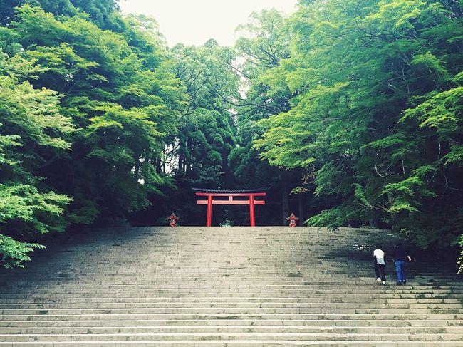 霧島神宮 鳥居 階段 Shrine Shrine Of Japan Kirishima Kirishimashrine Kagoshima Trees Green Freshgreens TORII Torii Gate Shinto Shrine Gateway Archway Stairs Steps Japan