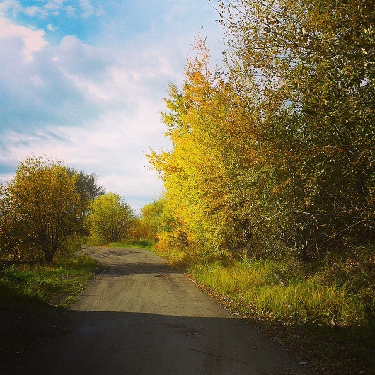 tree, autumn, nature, no people, the way forward, sky, tranquility, road, day, tranquil scene, growth, outdoors, scenics, beauty in nature, landscape, grass