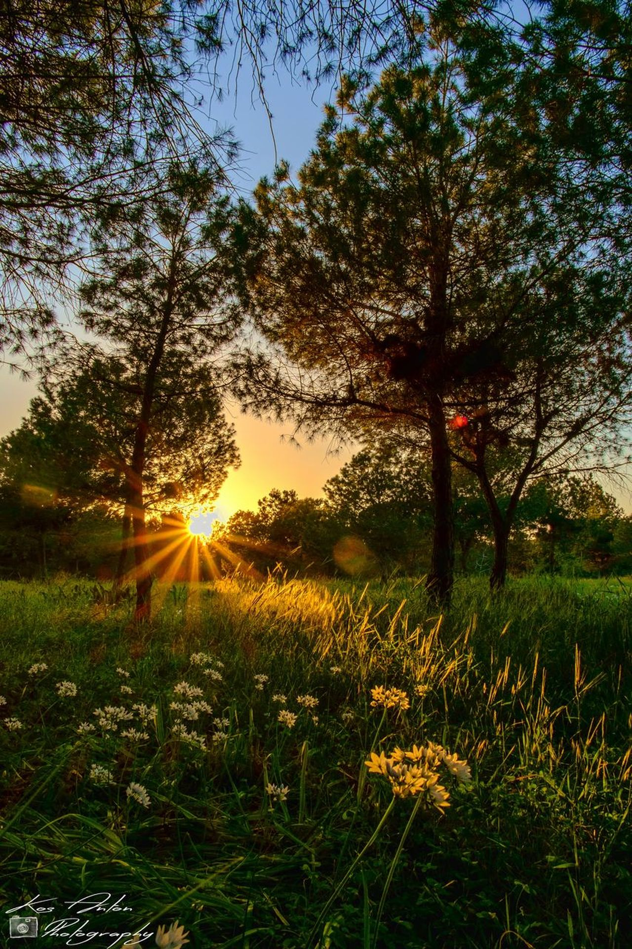 Flower Flowers Landscape Nature Nature_collection Sun Sunset Tree Trees