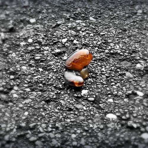 Baby Snail!!