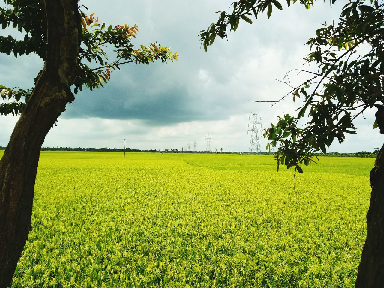 In enviroment.. Tree Agriculture Field Farm Nature Growth Green Color Crop  Rural Scene No People Cereal Plant Day Landscape Social Issues Outdoors Cloud - Sky Cultivated Food Beauty In Nature Irrigation Equipment Nature On Your Doorstep Natural Beauty Nature Photography