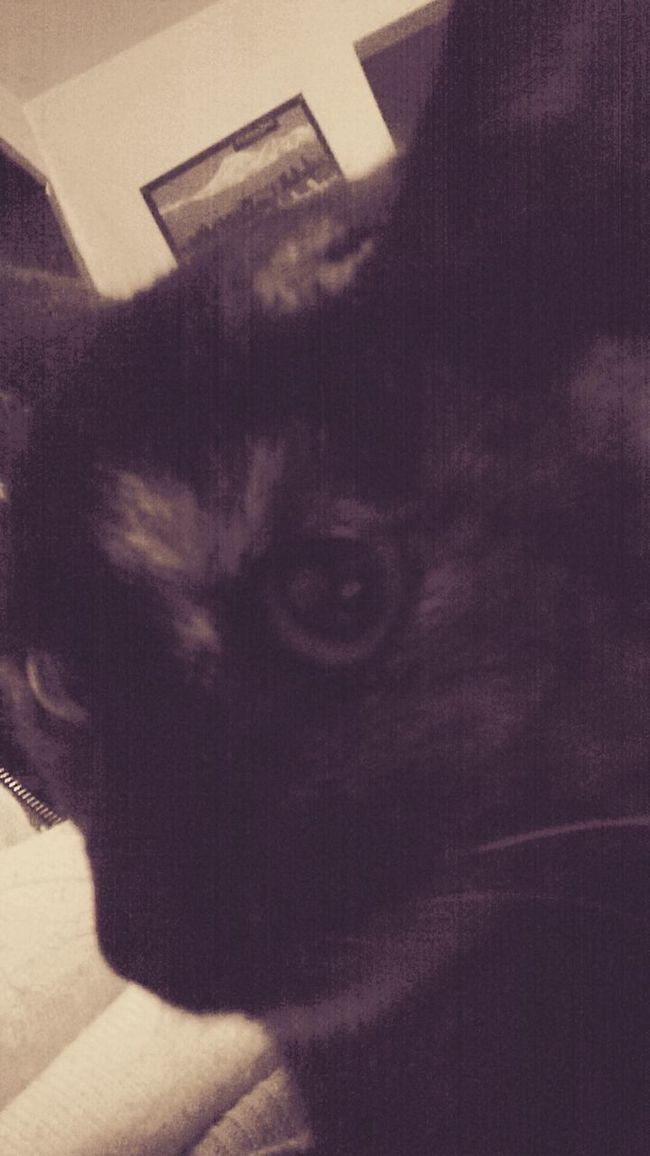 Relaxing Self Portrait Cat