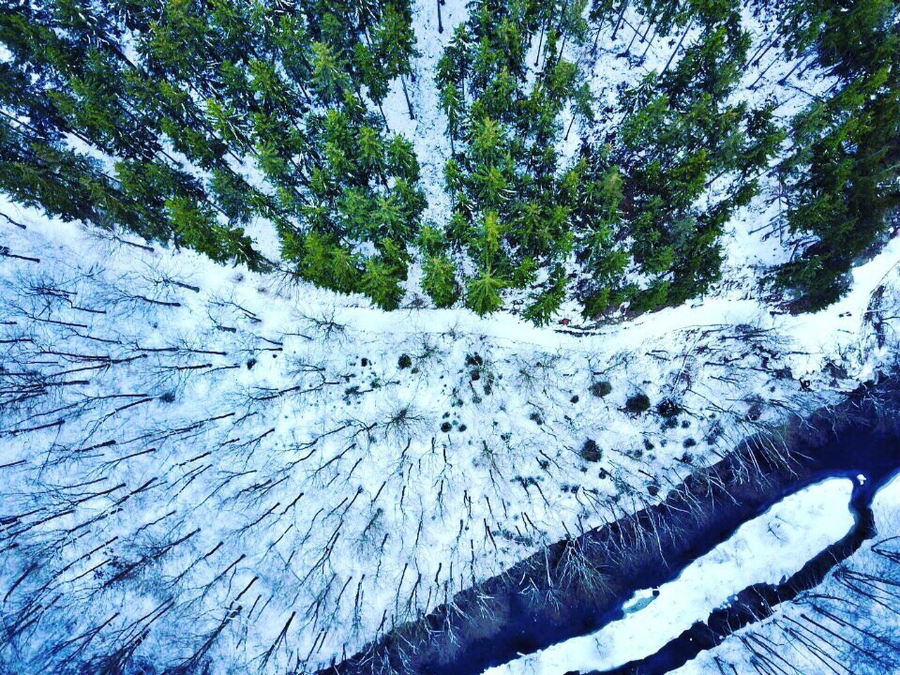 Nature Winter snow Tree beauty in Nature cold temperature outdoors day no people Growth Tree trunk sky scenics landscape dji www.airteam.camera Drones Birdseye View Drone dronephotography