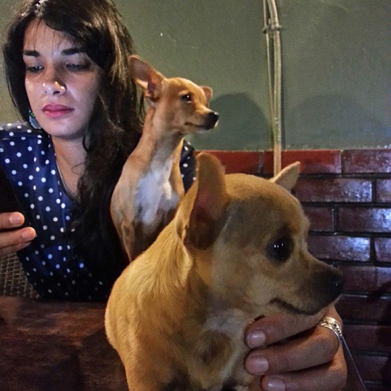 @rehabhzg Gremlins Chihuahua Lamarsa