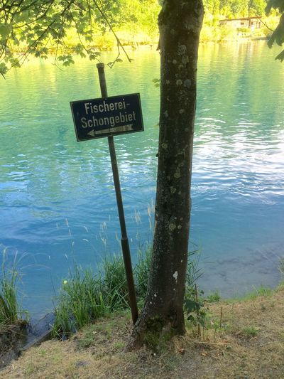 No fishing sign at the Aare riverside in Bern, on a warm day with many river swimmers Riverside Tree Signs Light