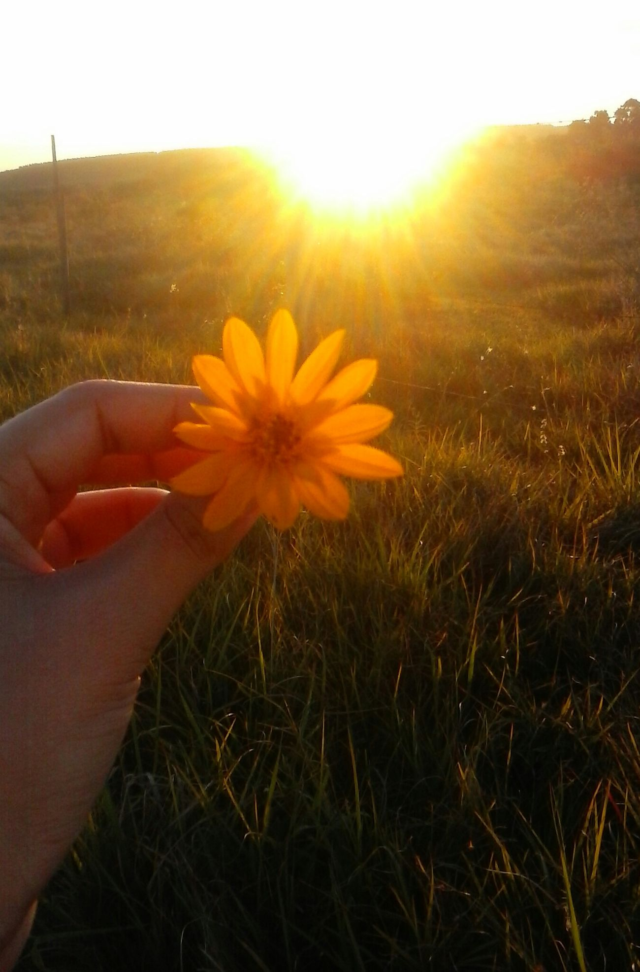 Por Do Sol Cachoeira Do Sul Beautiful Nature Pretty Flower