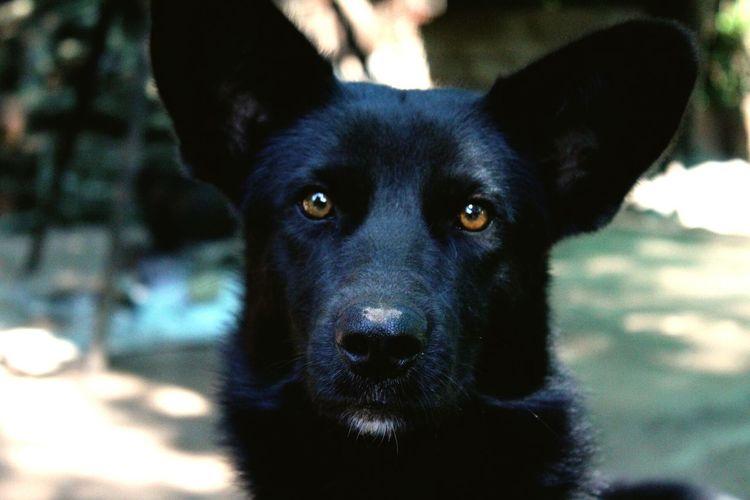 Mirada. Animal_collection Animals Dog❤