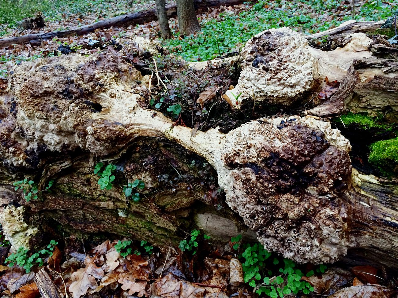 Wood Woods Wooden Wood - Material WoodLand