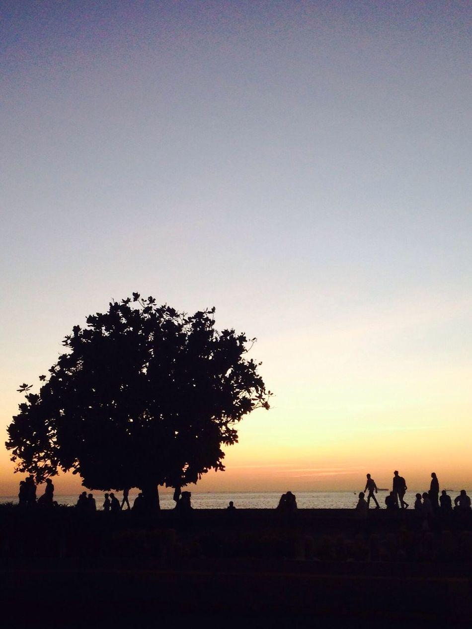 Sunset Silhouettess