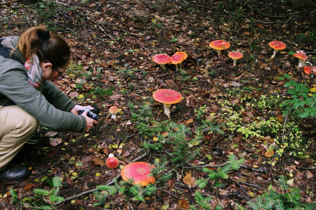 Mushroom Shooting Amanita Muscaria Autumn Day Fliegenpilz Fly Agaric Mushroom Fungi Hexenring Leisure Activity Mushroom Mushrooms Nature One Person Outdoors Schwarzwald Schwarzwaldliebe Women Miles Away The Great Outdoors - 2017 EyeEm Awards Live For The Story