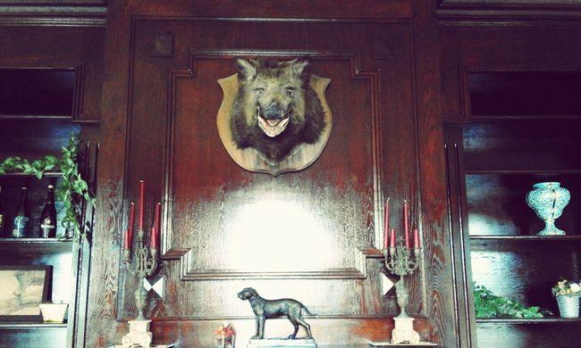 Old Furniture Castles Dead Animals