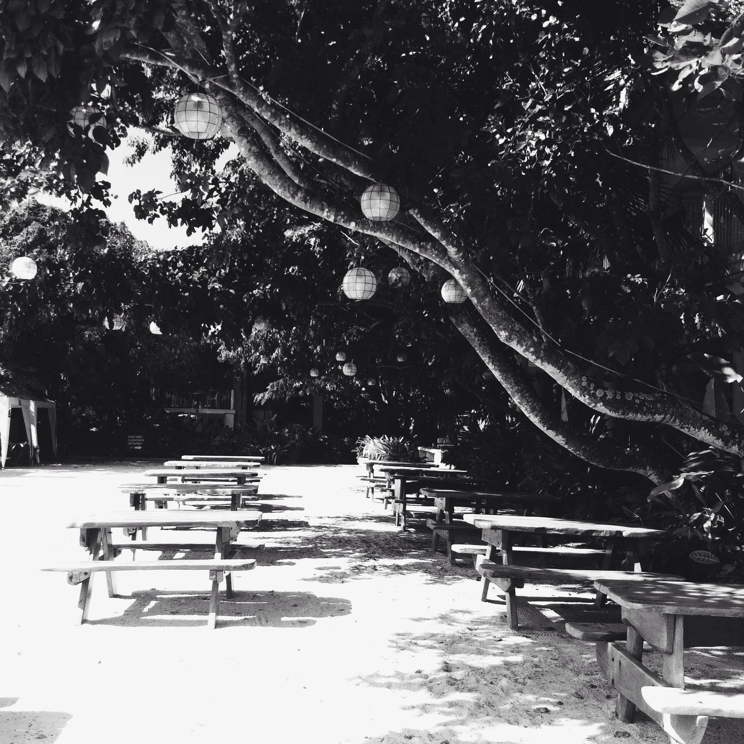 tree, bench, empty, chair, absence, seat, tranquility, park bench, park - man made space, tranquil scene, table, nature, sunlight, growth, park, outdoors, day, water, no people, scenics