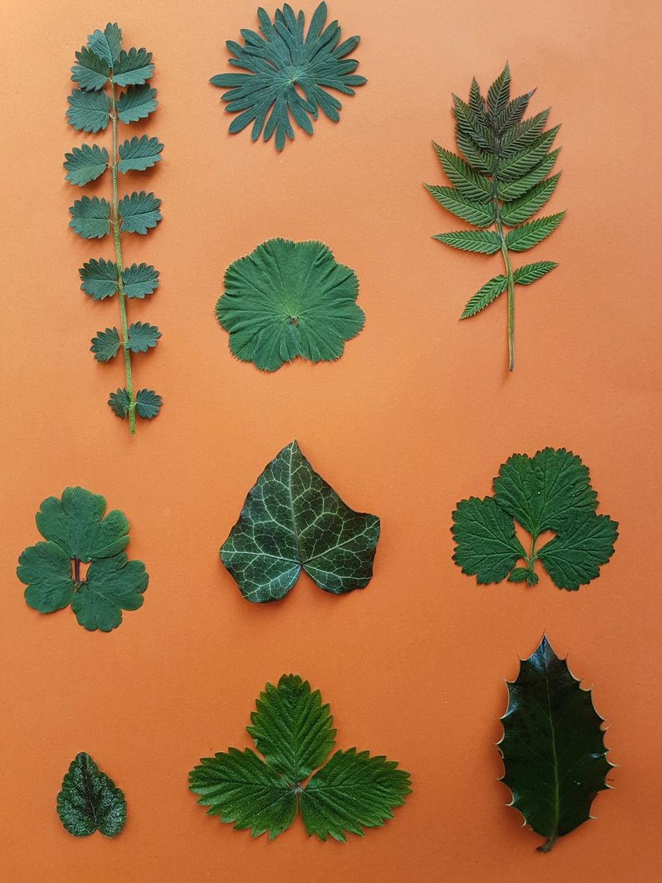 Many Leaves Leaves Green Color Orange Background Variation No People Day Art Is Everywhere