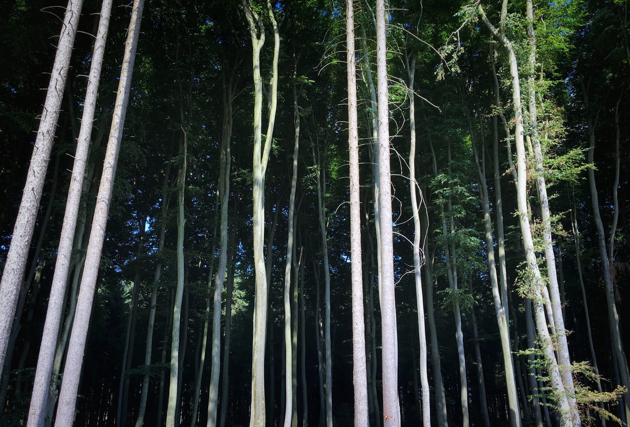 Stop Bamboo - Plant Bamboo Grove Beauty In Nature Day Forest Growth Low Angle View Nature No People Outdoors Scenics Tranquil Scene Tranquility Tree Tree Trunk