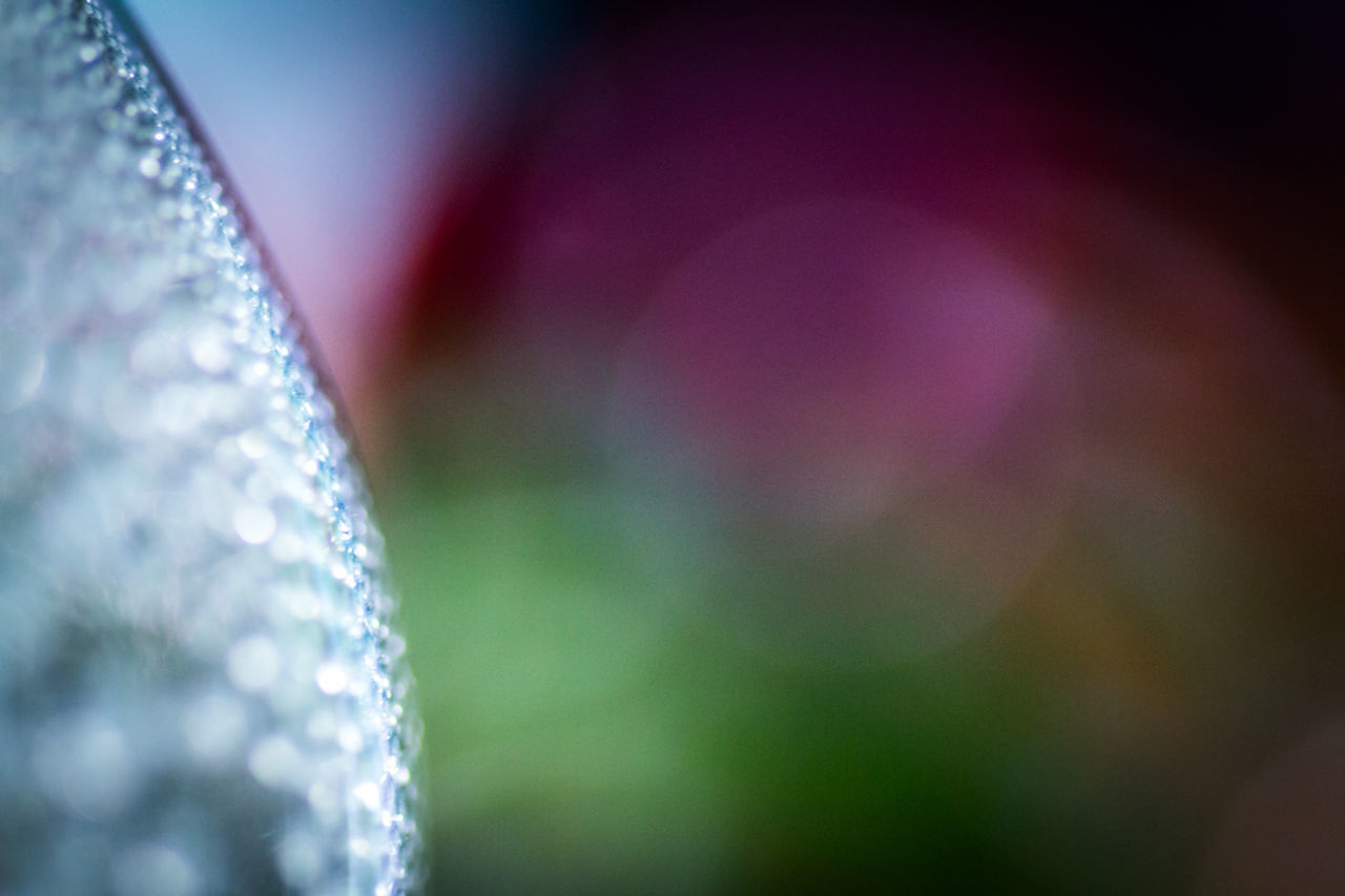 close-up, selective focus, focus on foreground, indoors, shiny, no people, fragility, freshness, day
