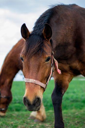 Pferd Neugier  Blick Kopf Braun Augen Horse Brown Showcase April