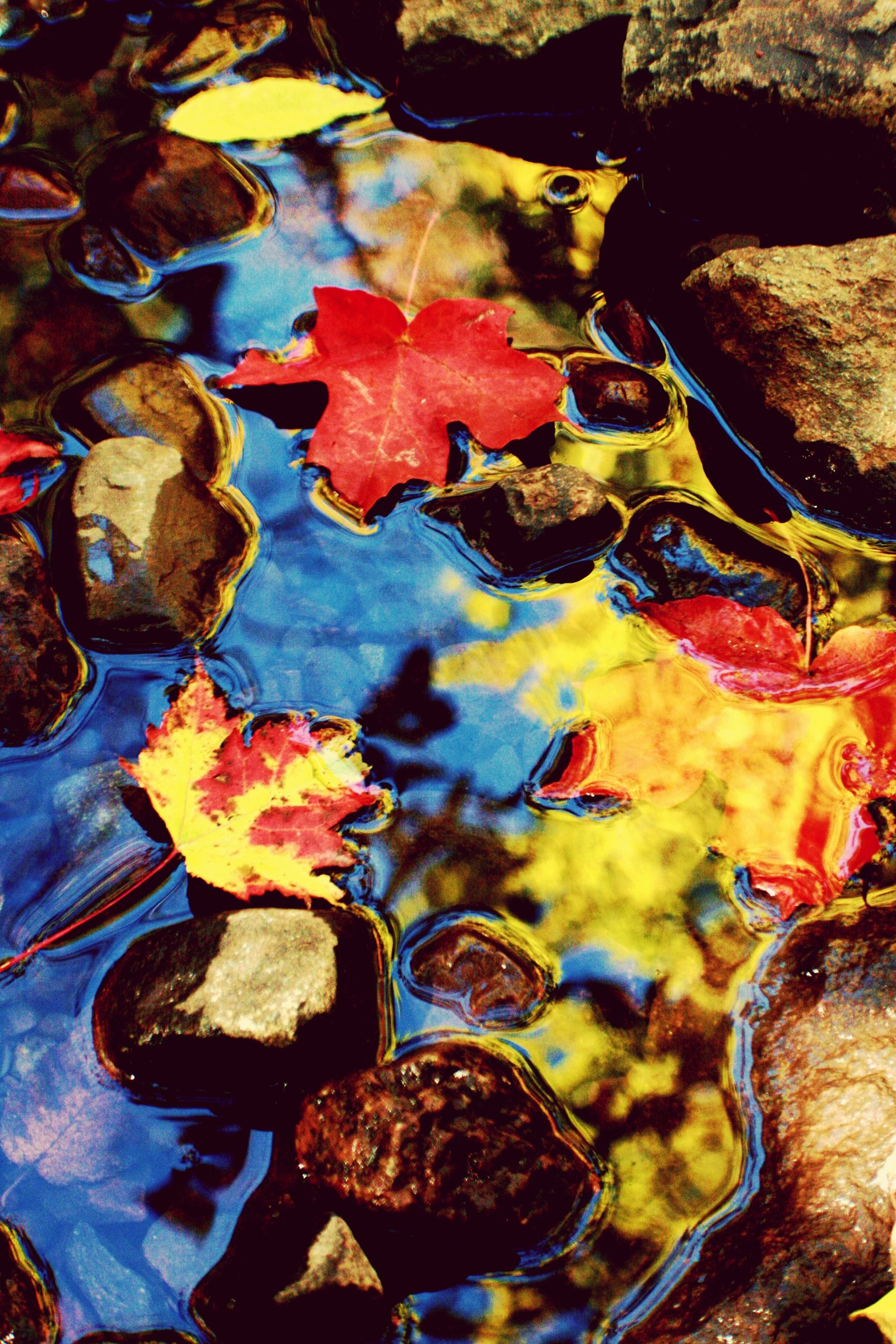 autumn, leaf, change, backgrounds, full frame, high angle view, fallen, leaves, nature, close-up, dry, orange color, natural pattern, textured, season, rock - object, no people, multi colored, indoors