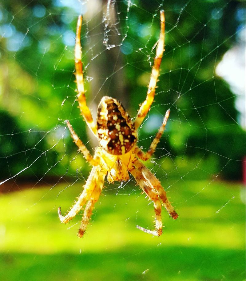 Nature_collection Nature Photography Nature Close-up Macro Photography Macro Animals Insect Spider Spiderweb Beautiful Beautiful Nature Legs DiscustingCute Calm Sleepy Ornaments Big One Gorgeous Excited Near Hotel Best Shot Close Up Shoot Lithuania