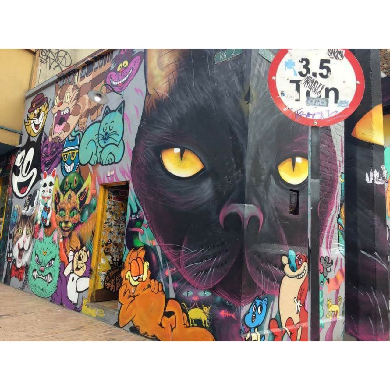 graffiti, domestic cat, no people, multi colored, animal themes, domestic animals, pets, day, close-up, indoors, mammal