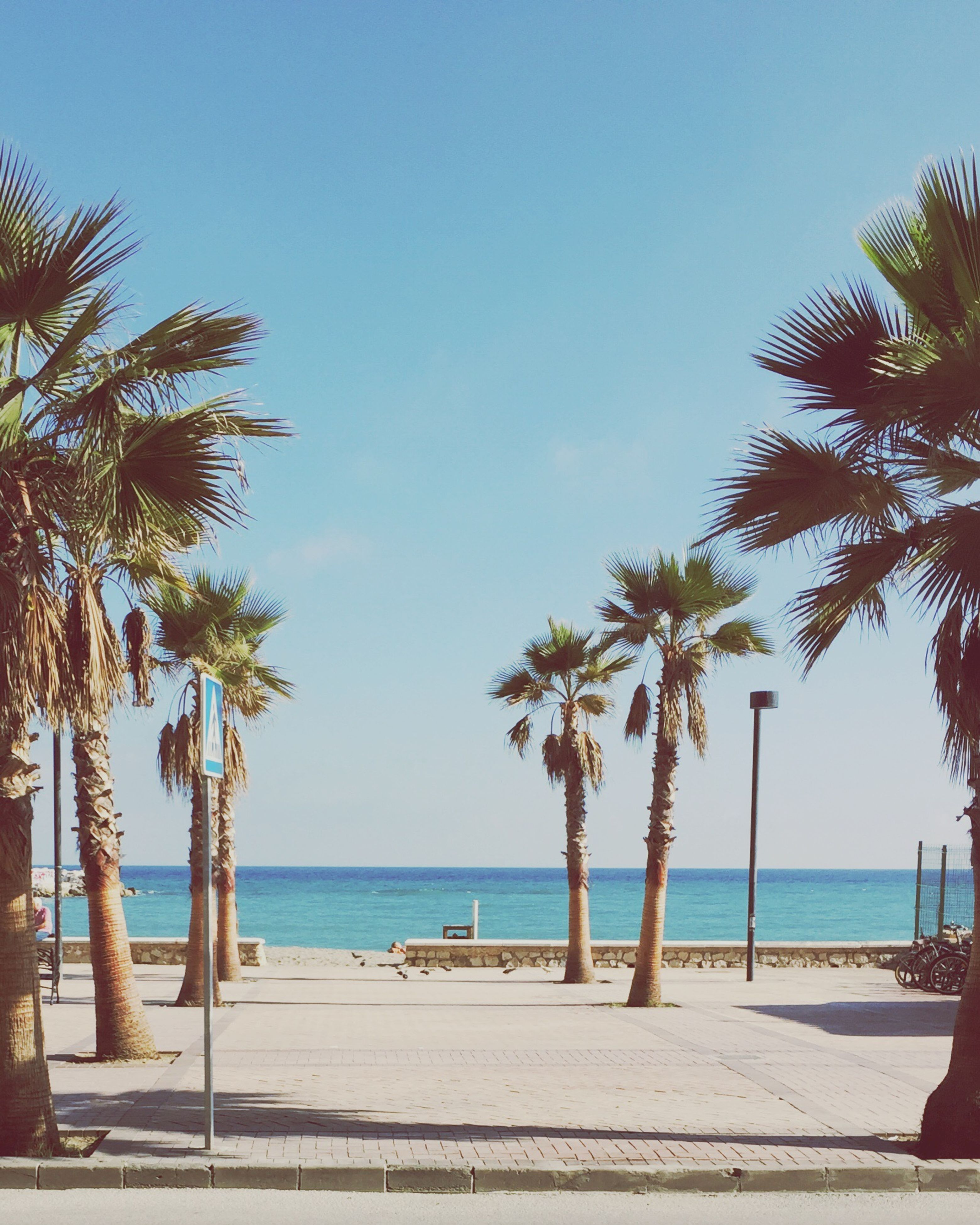 sea, horizon over water, palm tree, water, tree, beach, clear sky, tranquility, tranquil scene, blue, scenics, beauty in nature, nature, shore, sky, copy space, growth, tree trunk, idyllic, sunlight