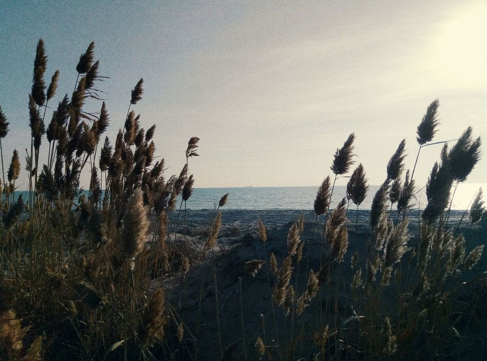 good to live near the sea Caspian Sea No People Beauty In Nature First Eyeem Photo