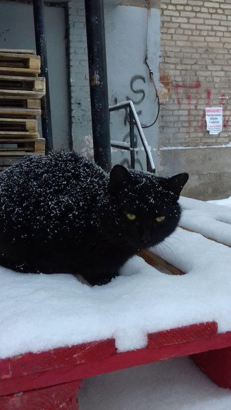 кошки это кошки Коты собственное творение кошечка😺🐱